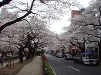 20110407harimazaka